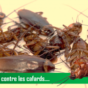 prévention anti-cafards maroc ADIC Hygiène 3D au Maroc